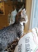 Cat off stare
