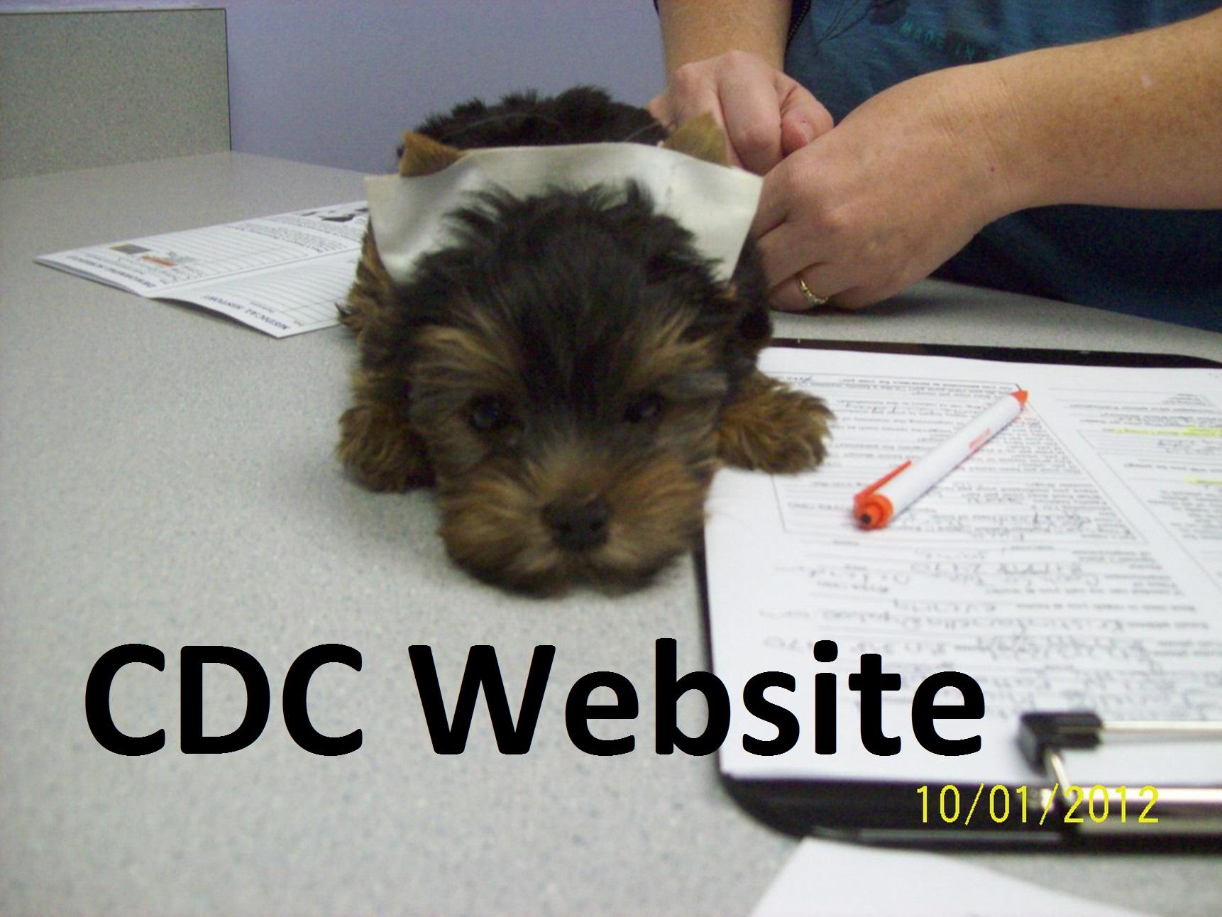 Loving Care Animal Hospital   Veterinarian