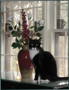 Picture of black cat with vase