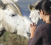 Woman petting two white horses