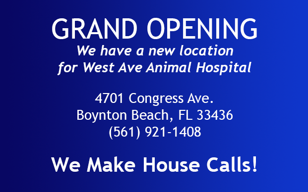 Grand Opening New Location 4701 Congress Ave