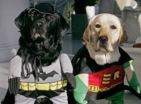 Labs as Batman and Robin
