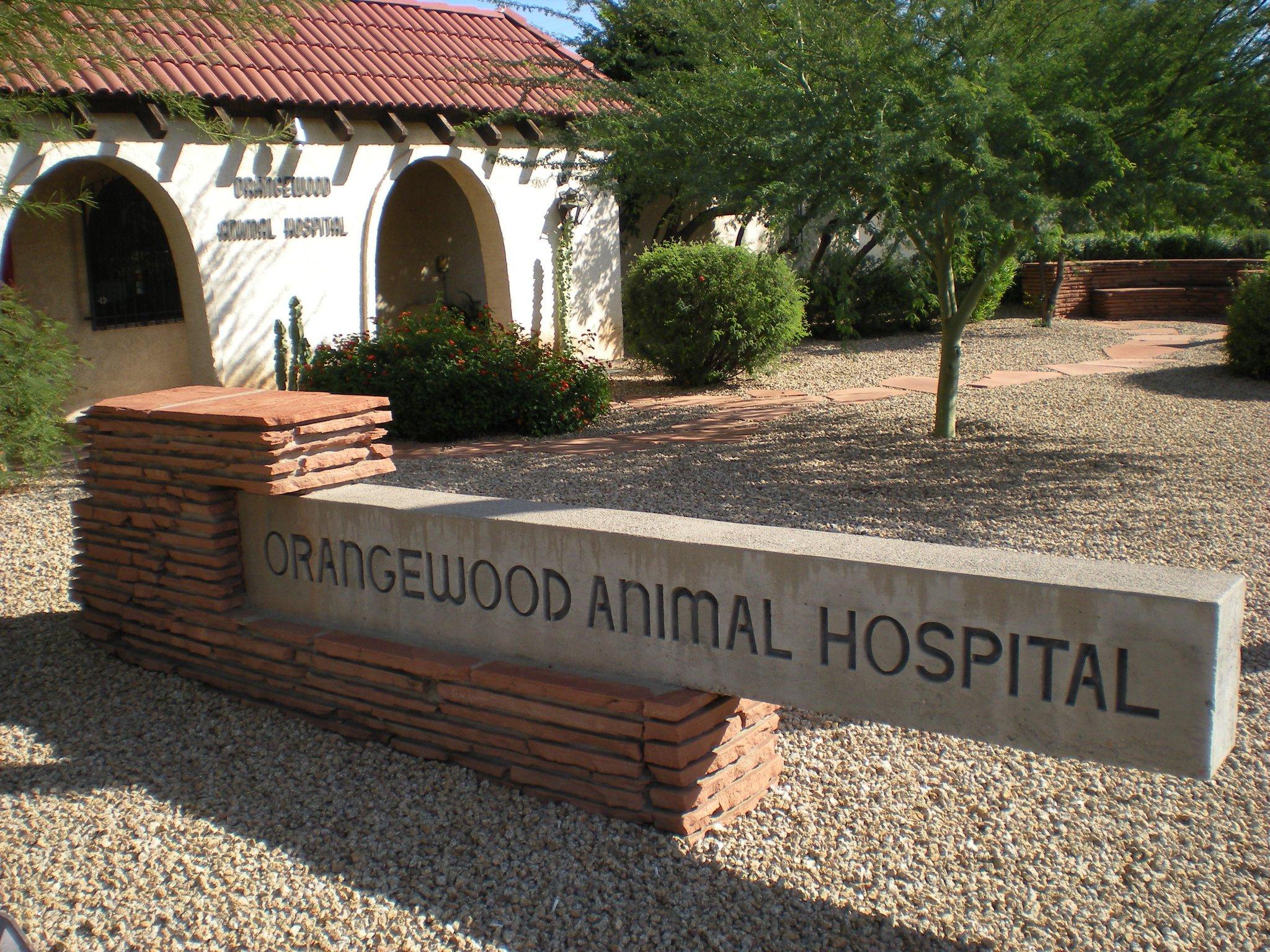 veterinary hospital caring vet
