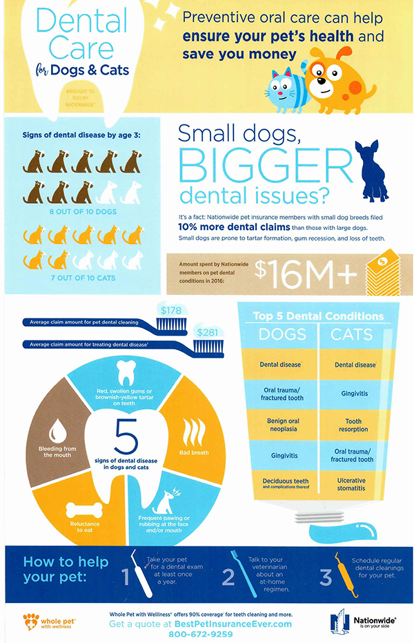 Dental Care for Dogs & Cats