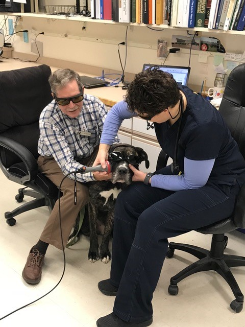 Dog being examined with laser
