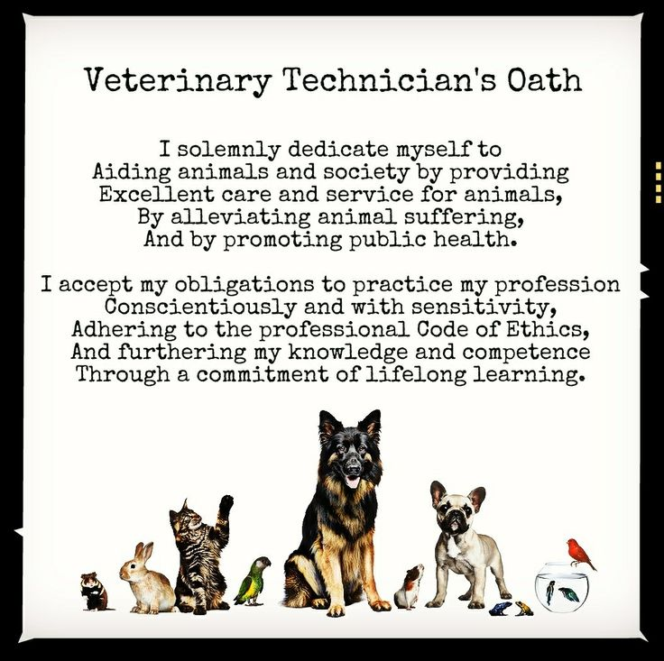 Petcare Animal Hospital | Veterinarians and Staff