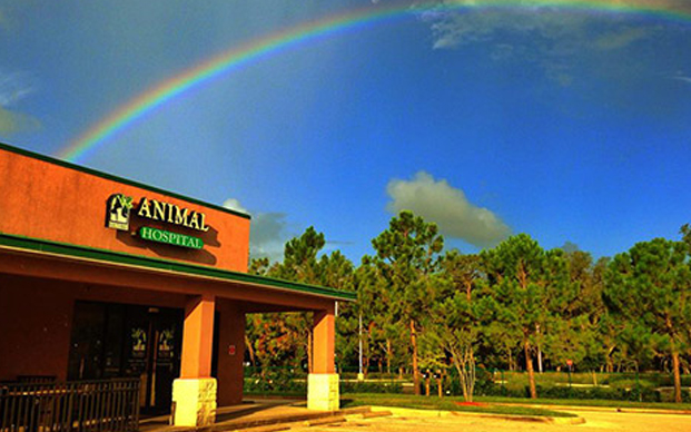 Rainbow over Southbay Animal Hospital store front