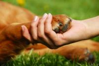 Abbey Animal Pain Management