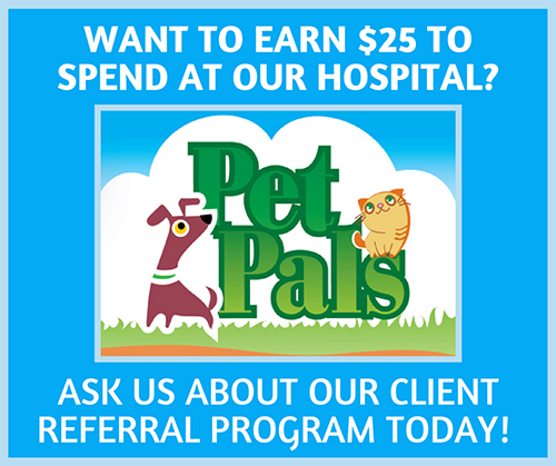 Want to earn $25 to spend at our hospital? Ask us about our client referral program today!