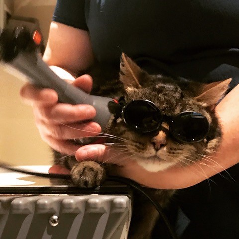 Cat being examined by laser