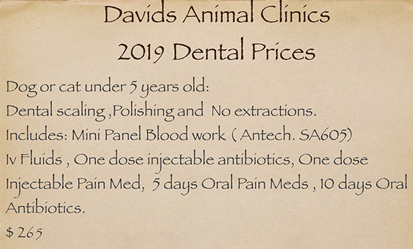 Canine Dental dog or cat under 5 years old, $265