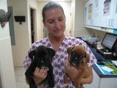 Dogs in the vet hospital