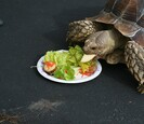 Turtle eating