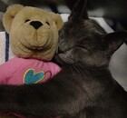 Cat hugging a teddy bear