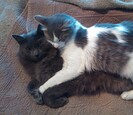 Two cats laying on top of each other