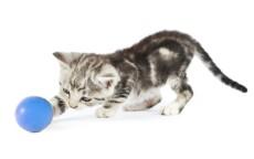 Kitten with ball