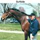 Dr. Yocum with horse Surfside