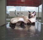 Cat on the exam table