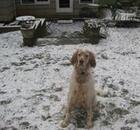 Dog playing outside in the snow