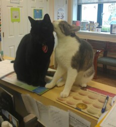 Cats sitting on the reception desk