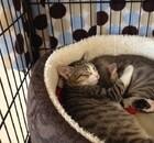 Adoptable kitties