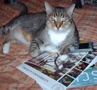 Cat laying on magazines with a cell phone