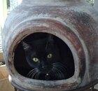 Cat in a chiminea