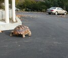 Turtle walking outside