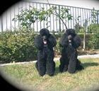 Jett & Ringo