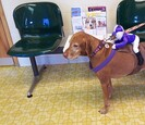 Dog wearing a horse racing costume