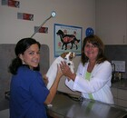 Doctor and staff member examining a dog