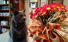 Pewter, one of the clinic cats, enjoys stopping to smell the flowers.