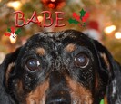 Pet of the Month for December 2016