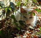 White cat laying in the grass and leaves