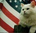 July4th-kitty