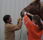 Staff working on a horse
