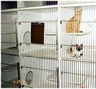 Cats in Kennels