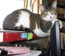 Cat sitting on top of the computer