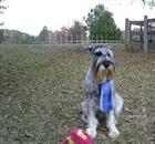 Dog with her ribbons and awards