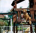 A girl and a dog in a treehouse