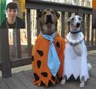 Dogs dressed up as Flintstones