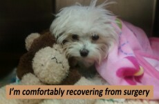 Recovering from Surgery