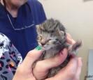Newborn kitty